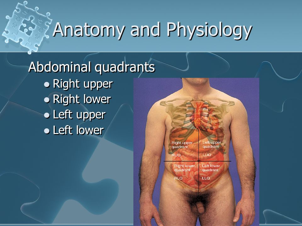 anatomey and physiology Anatomy and physiology blog home new medicines for deadly diseases it should be noted that this is only an extremely general overview of the physiology of the human body.