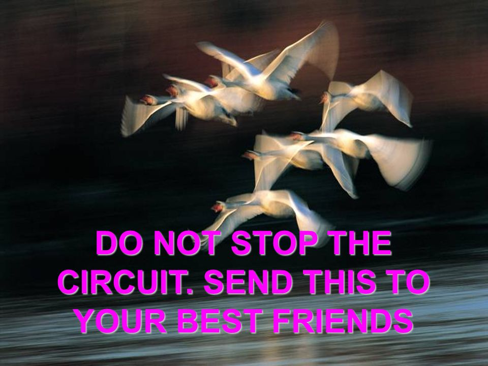 DO NOT STOP THE CIRCUIT. SEND THIS TO YOUR BEST FRIENDS