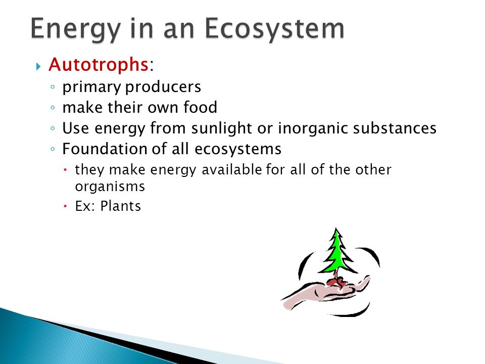 Energy in an Ecosystem Autotrophs: primary producers