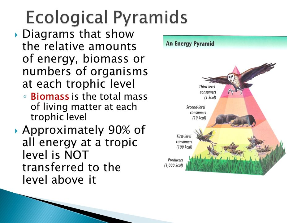 Ecological Pyramids Diagrams that show the relative amounts of energy, biomass or numbers of organisms at each trophic level.