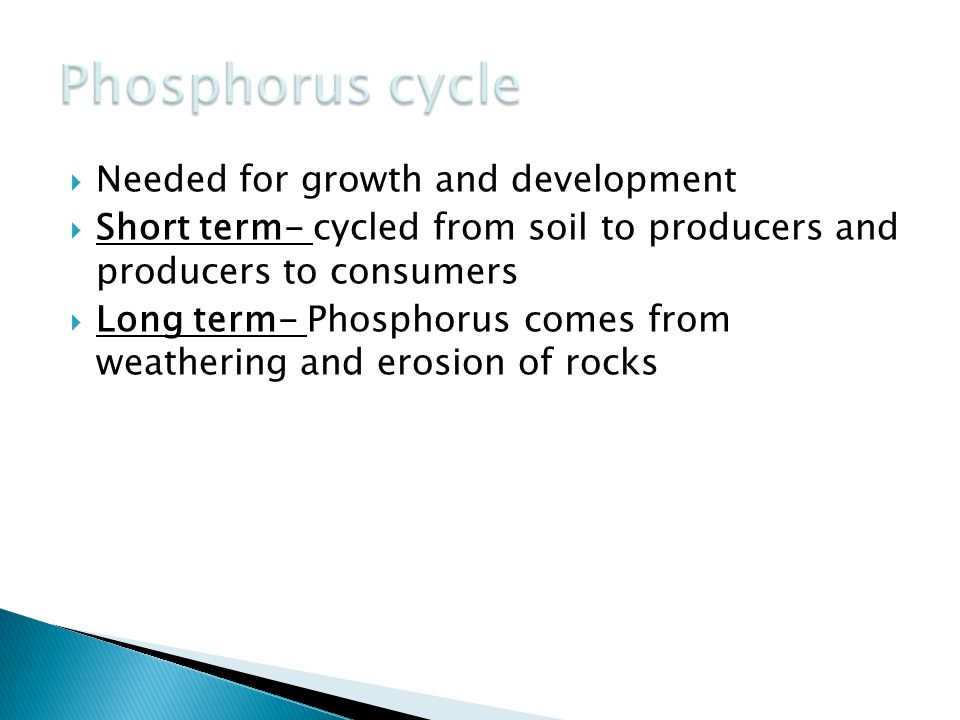 Phosphorus cycle Needed for growth and development