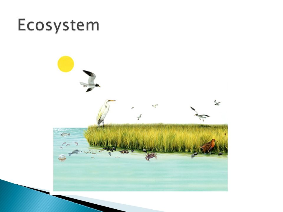 Chapter 18 Ecosystem