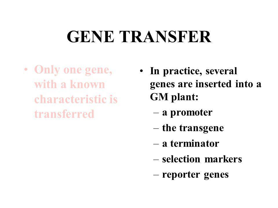 GENE TRANSFER Only one gene, with a known characteristic is transferred. In practice, several genes are inserted into a GM plant:
