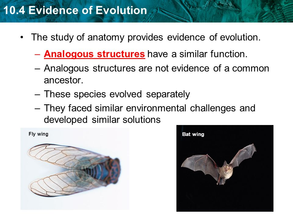 The study of anatomy provides evidence of evolution.