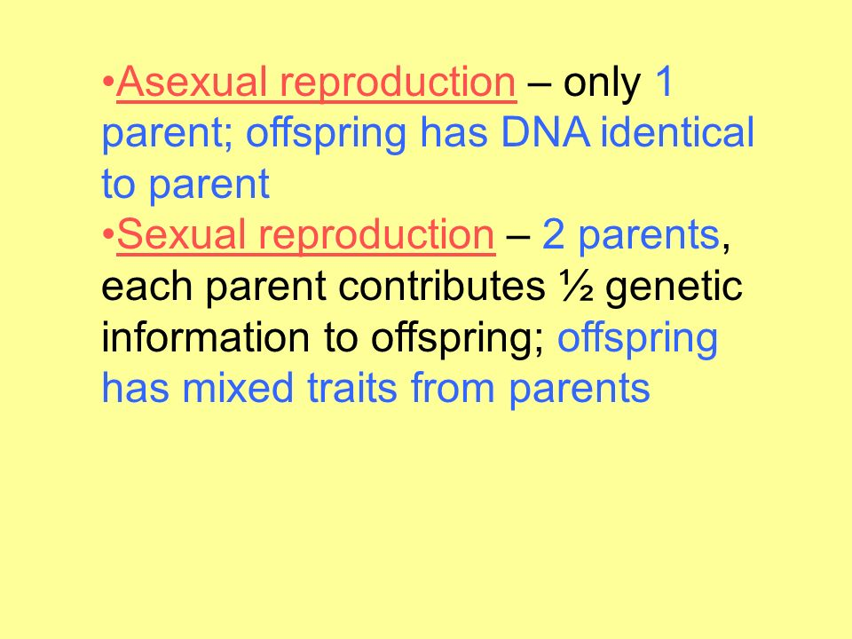 Asexual reproduction – only 1 parent; offspring has DNA identical to parent