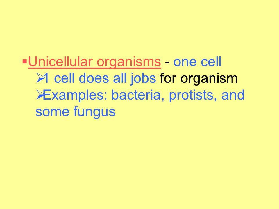 Unicellular organisms - one cell 1 cell does all jobs for organism.