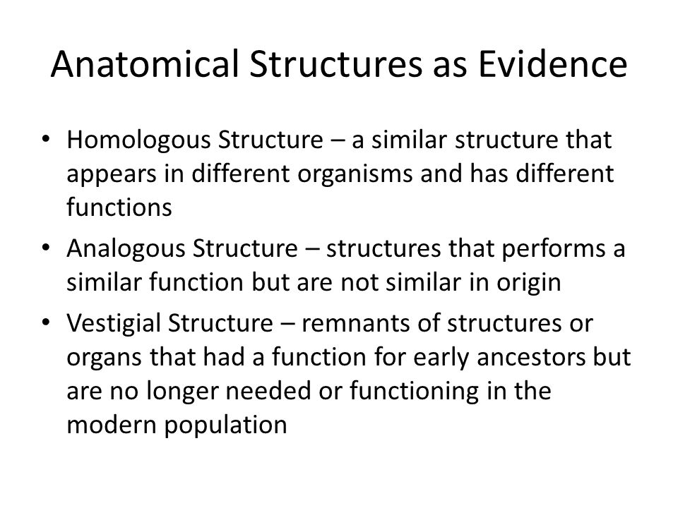 Anatomical Structures as Evidence