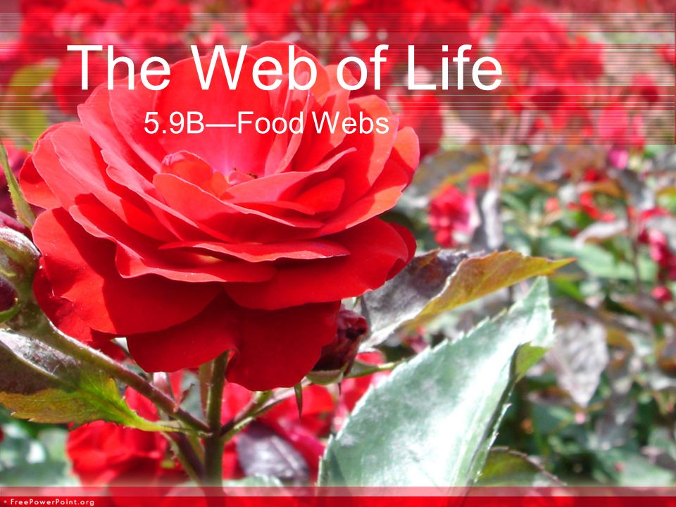 The Web of Life 5.9B—Food Webs