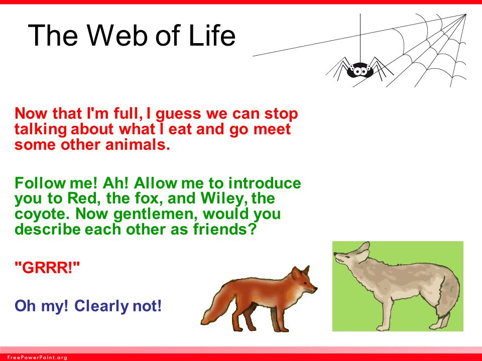 The Web of Life Now that I m full, I guess we can stop talking about what I eat and go meet some other animals.