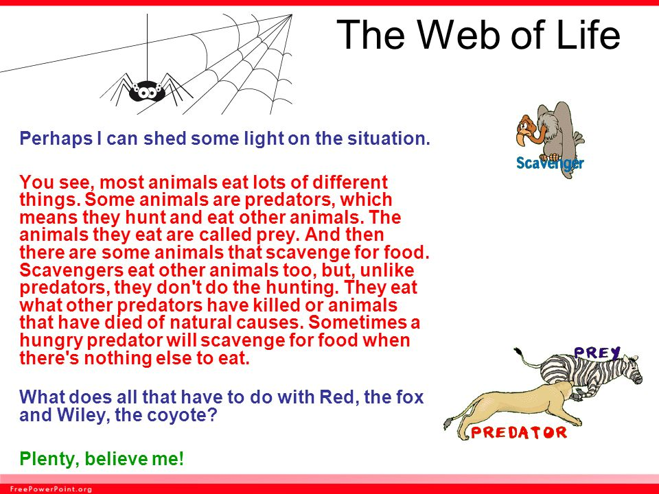 The Web of Life Perhaps I can shed some light on the situation.