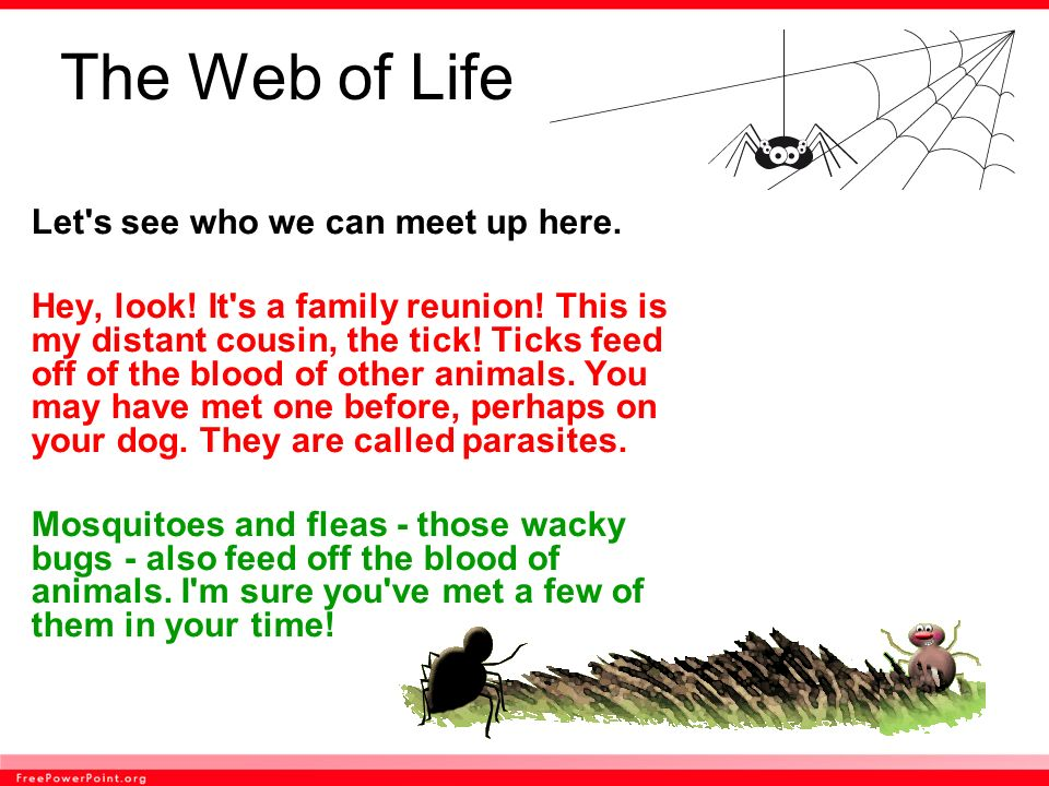 The Web of Life Let s see who we can meet up here.