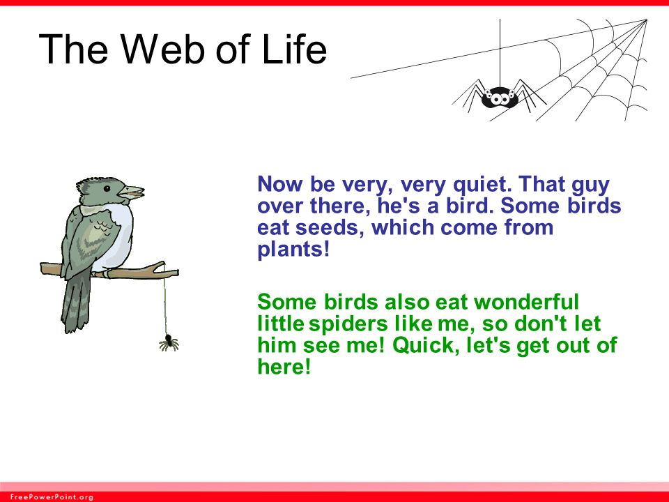 The Web of Life Now be very, very quiet. That guy over there, he s a bird. Some birds eat seeds, which come from plants!