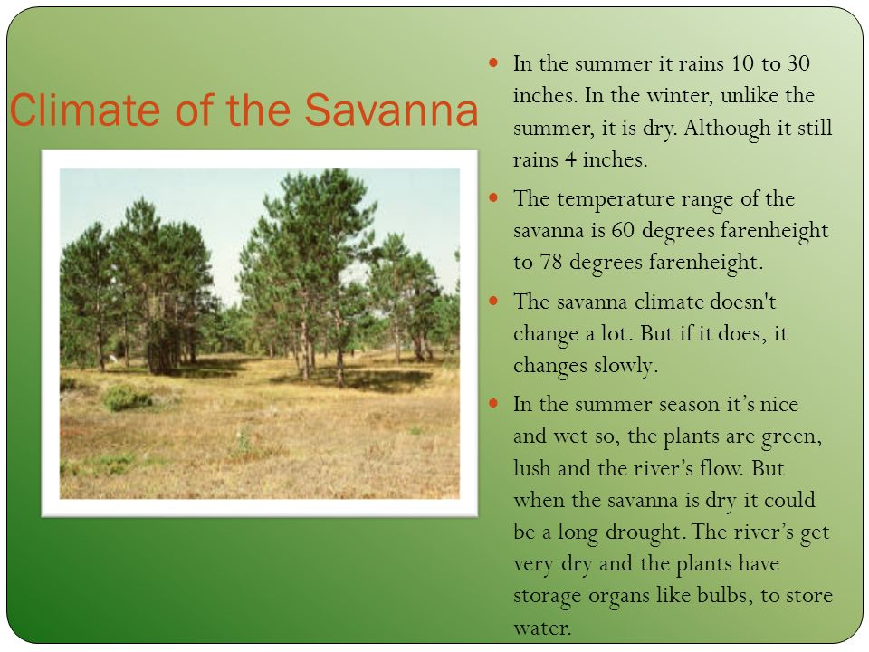 The Savanna Biome By Selena Declare Ppt Download