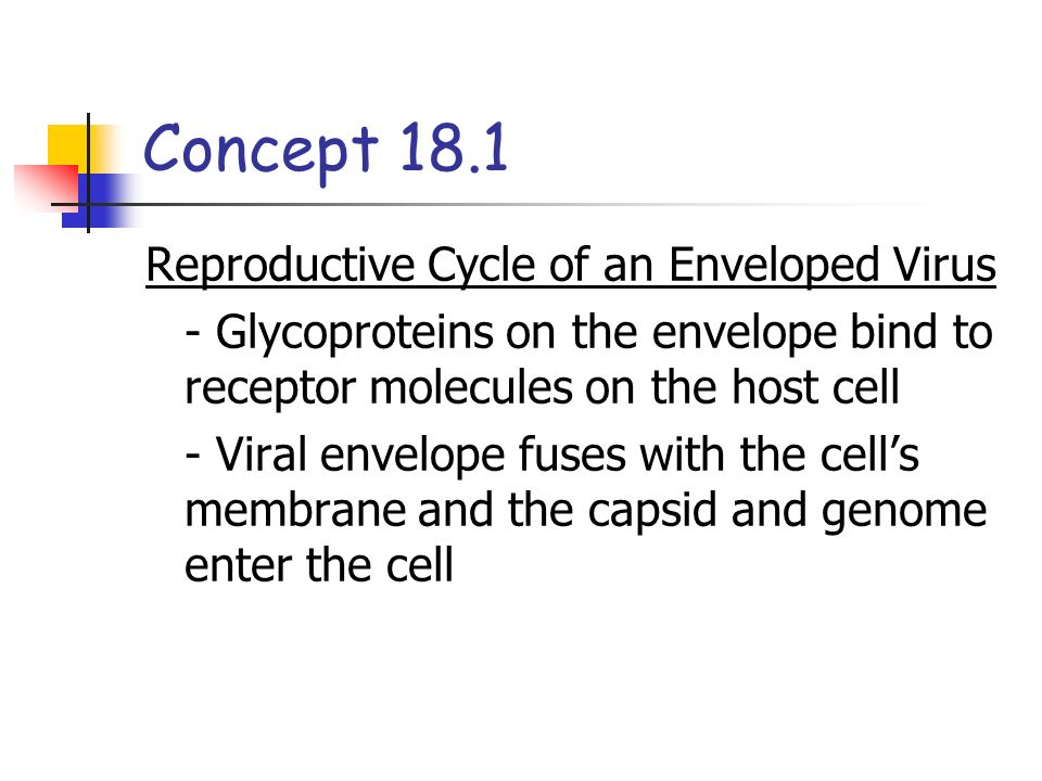 Concept 18.1 Reproductive Cycle of an Enveloped Virus