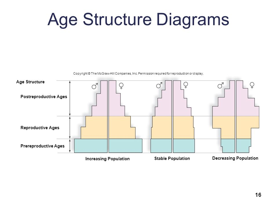 With Increased Population Age Structure Diagram Diy Wiring Diagrams