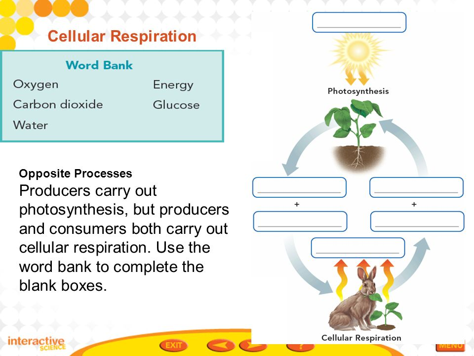Photosynthesis vs cellular respiration diagram unlabeled cell processes and energy ppt video online download rh slideplayer com relationship of photosynthesis to respiration relationship of photosynthesis to ccuart Choice Image