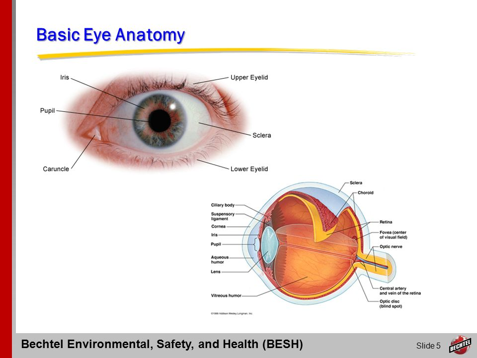 Eye Injuries and First Aid Response - ppt video online download