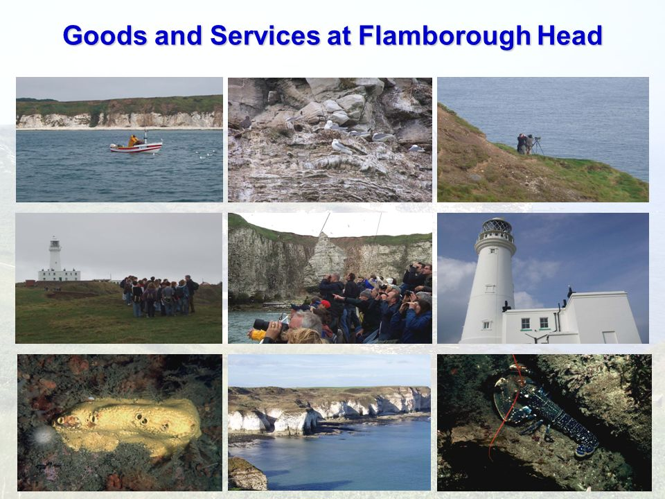 Goods and Services at Flamborough Head