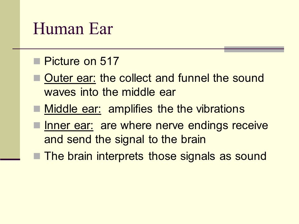 Human Ear Picture on 517. Outer ear: the collect and funnel the sound waves into the middle ear. Middle ear: amplifies the the vibrations.