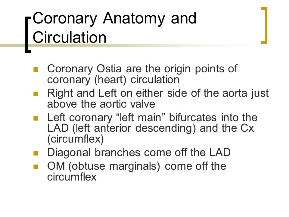 CARDIAC SURGERY I. - ppt video online download