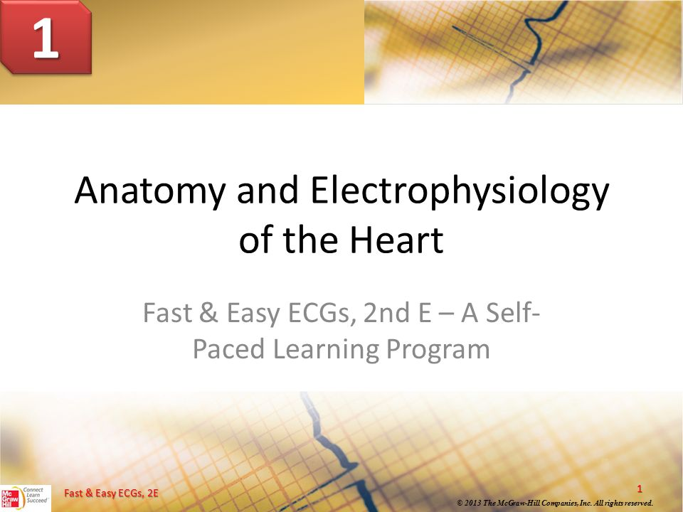 Anatomy And Electrophysiology Of The Heart Ppt Download