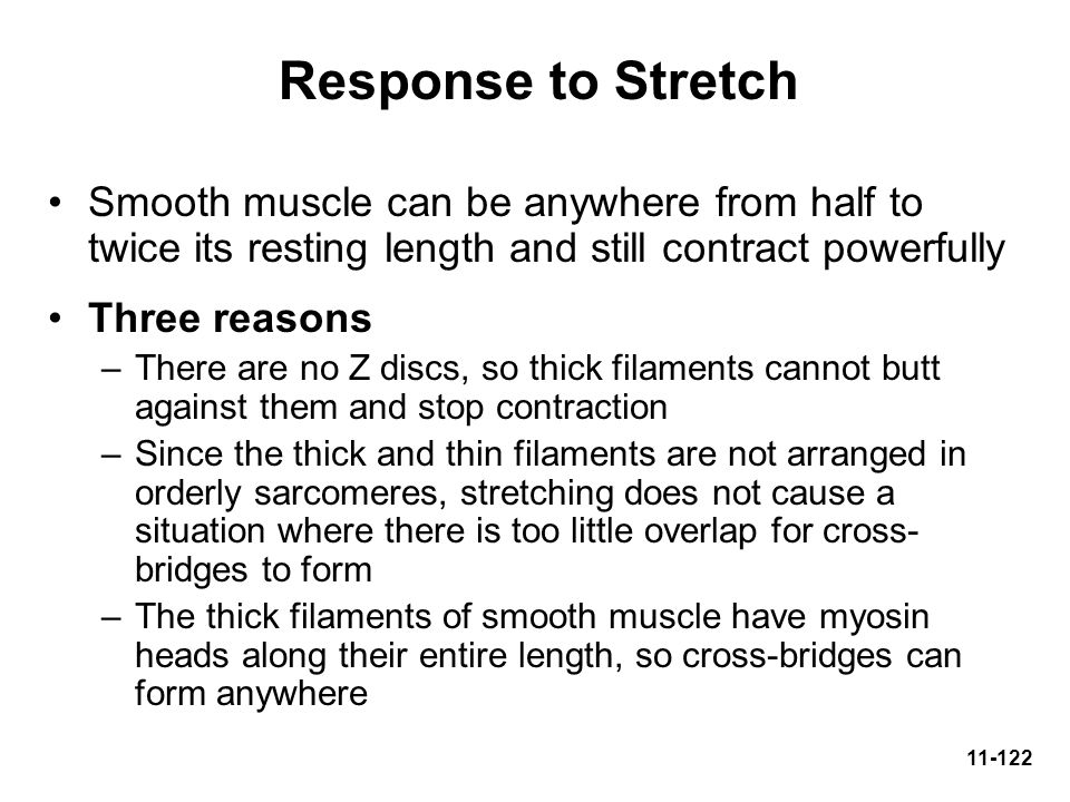 Response to Stretch Smooth muscle can be anywhere from half to twice its resting length and still contract powerfully.