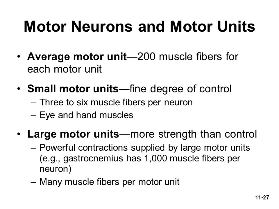 Motor Neurons and Motor Units