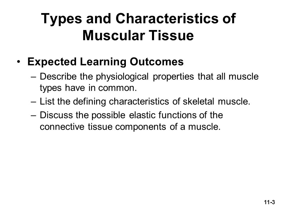 Types and Characteristics of Muscular Tissue