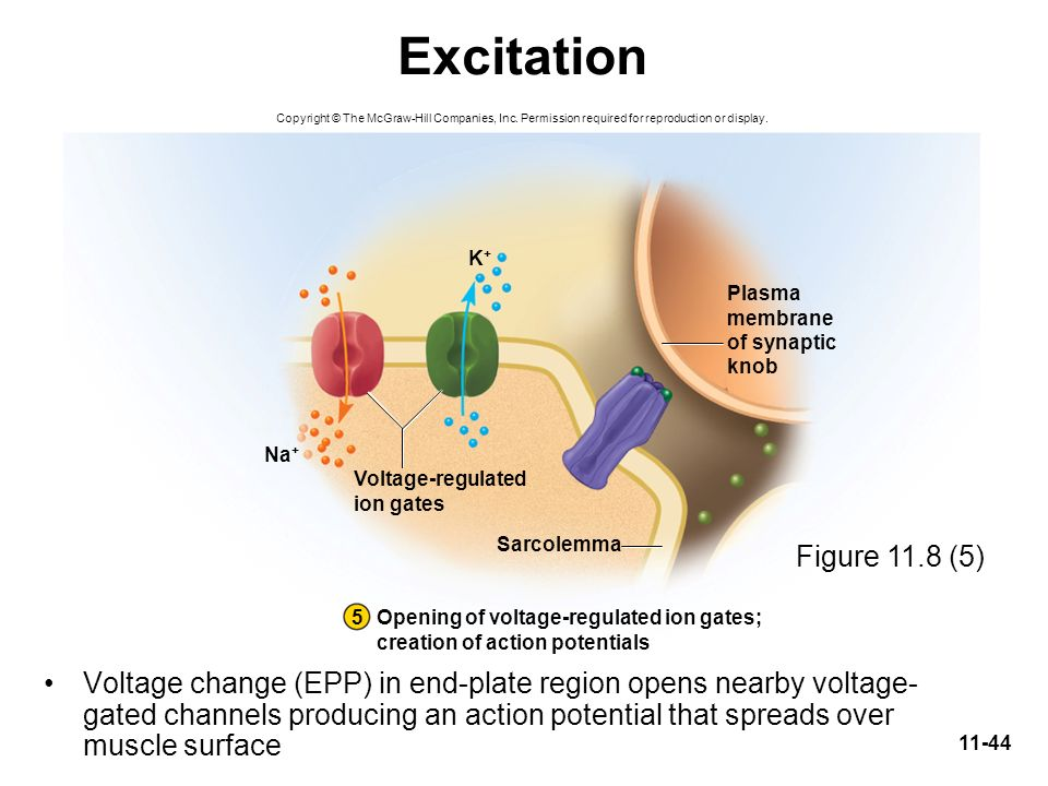 Excitation Copyright © The McGraw-Hill Companies, Inc. Permission required for reproduction or display.