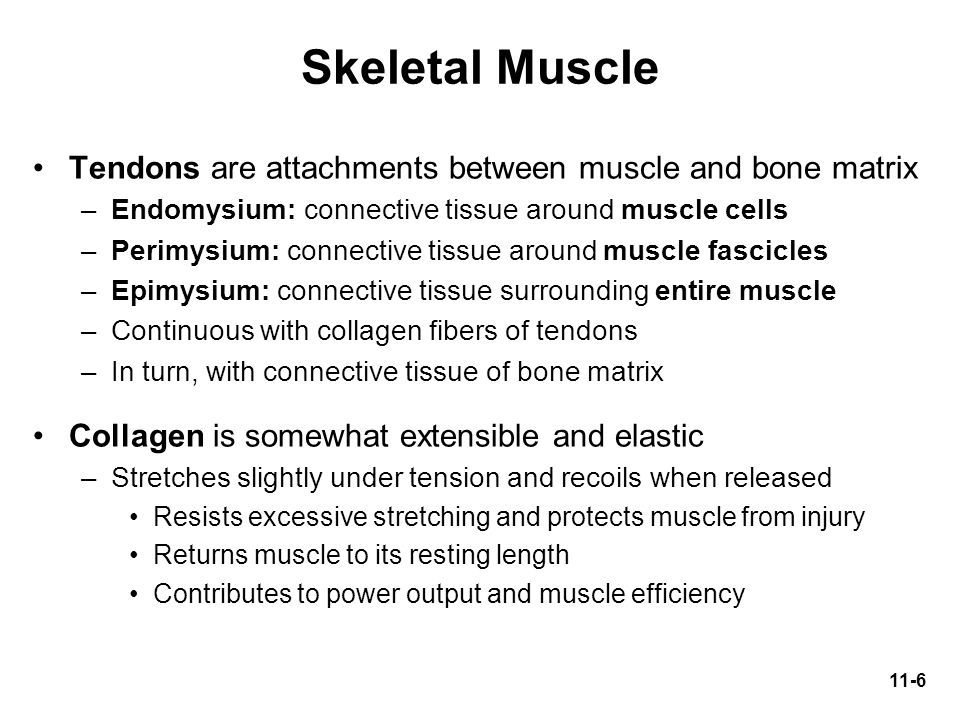 Skeletal Muscle Tendons are attachments between muscle and bone matrix
