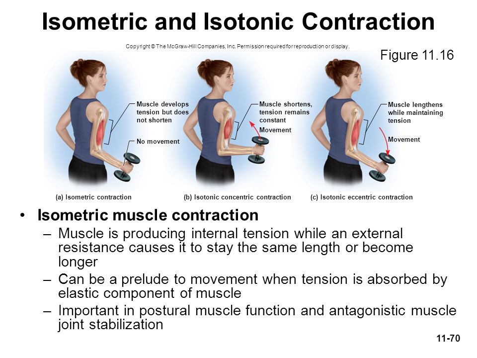 Isometric and Isotonic Contraction