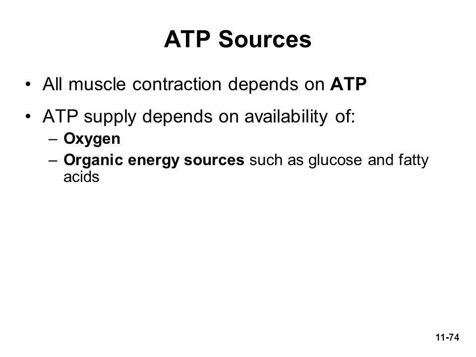 ATP Sources All muscle contraction depends on ATP