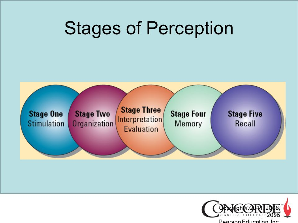 what are the stages of perception