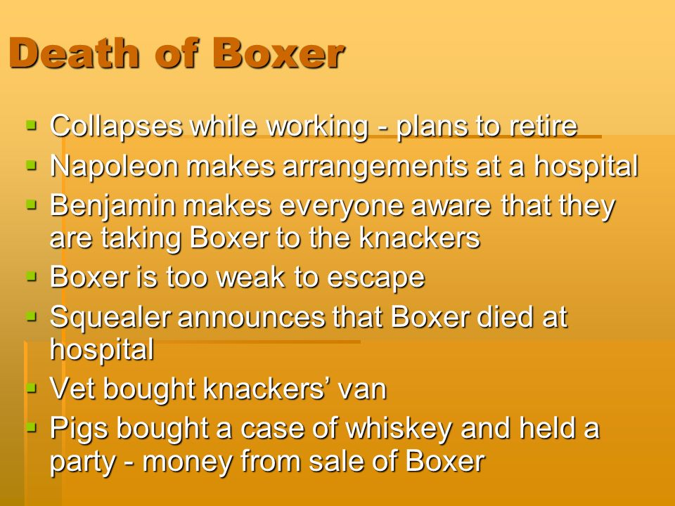Image result for Boxer was being sent to the knacker's