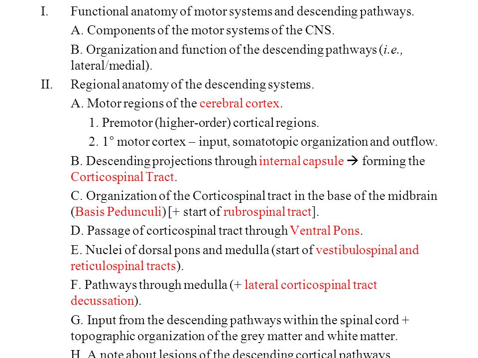 Descending Projection Systems and Motor Functions of the Spinal Cord ...