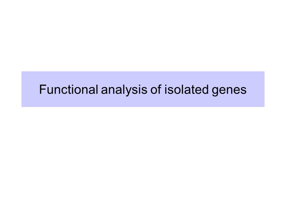 Functional analysis of isolated genes