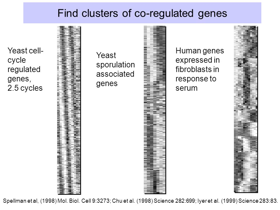 Find clusters of co-regulated genes