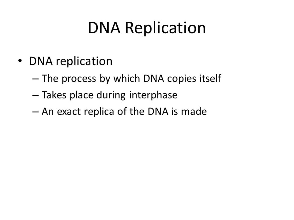 DNA Replication DNA replication The process by which DNA copies itself