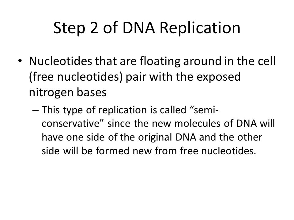 Step 2 of DNA Replication