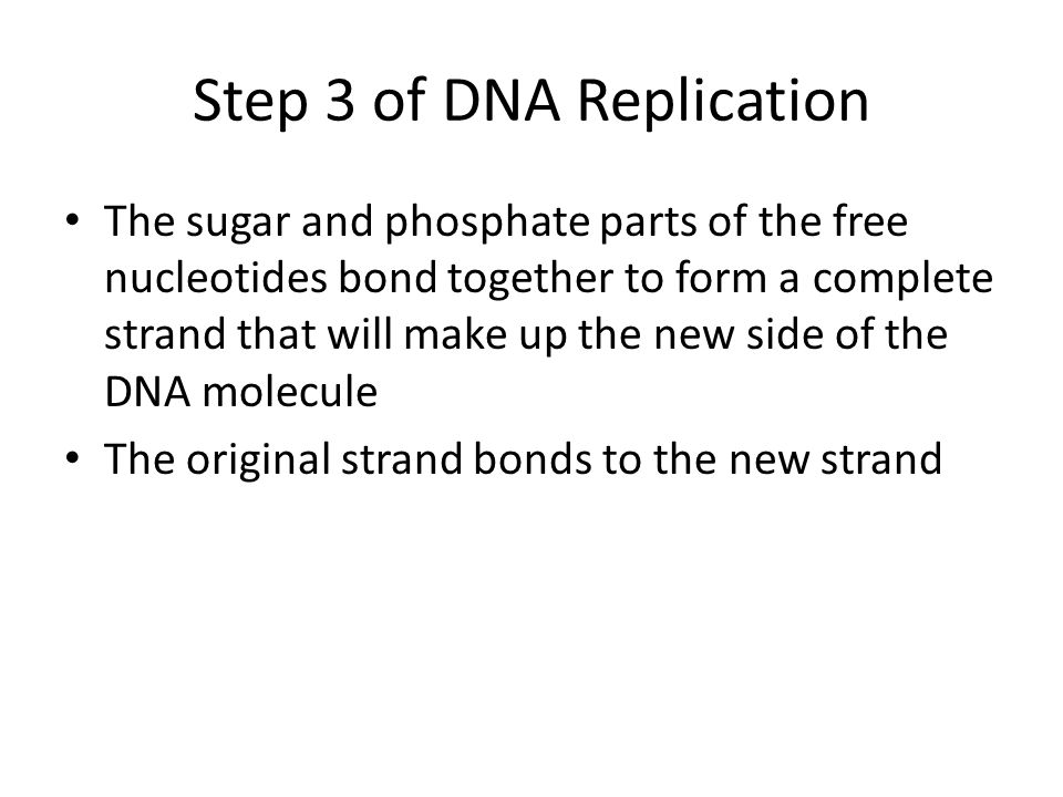 Step 3 of DNA Replication