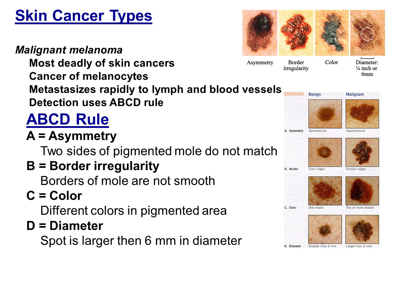 abcd in different styles chapter 4 skin amp membranes ppt 10642