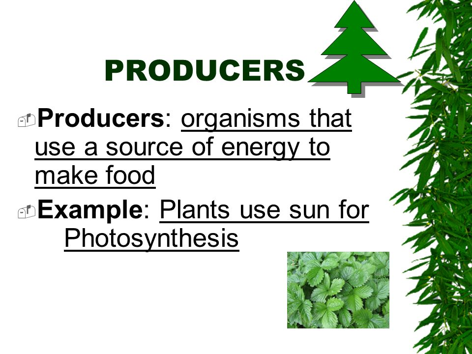 PRODUCERS Producers: organisms that use a source of energy to make food.