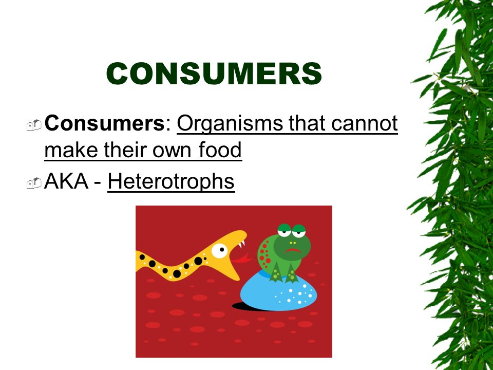 CONSUMERS Consumers: Organisms that cannot make their own food