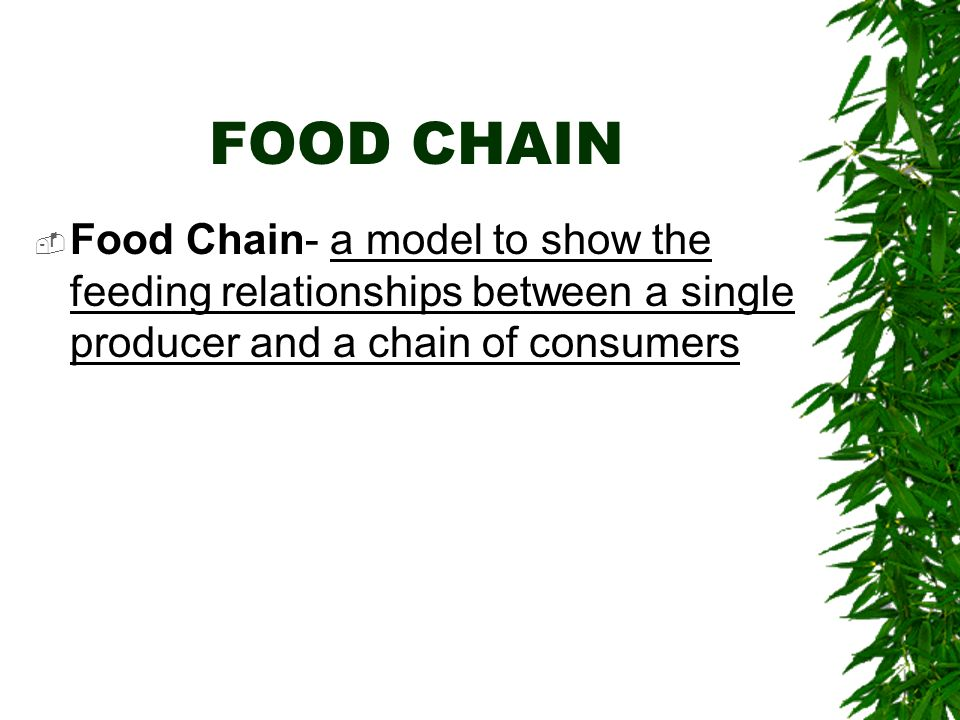 FOOD CHAIN Food Chain- a model to show the feeding relationships between a single producer and a chain of consumers.