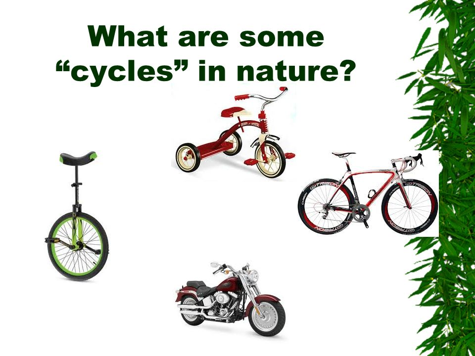 What are some cycles in nature