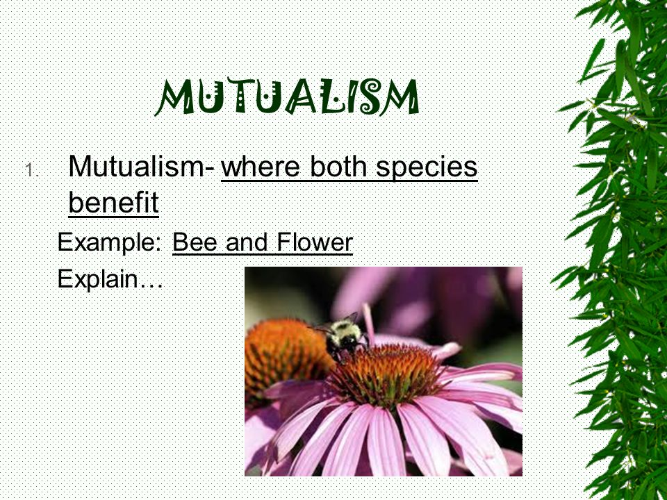 MUTUALISM Mutualism- where both species benefit