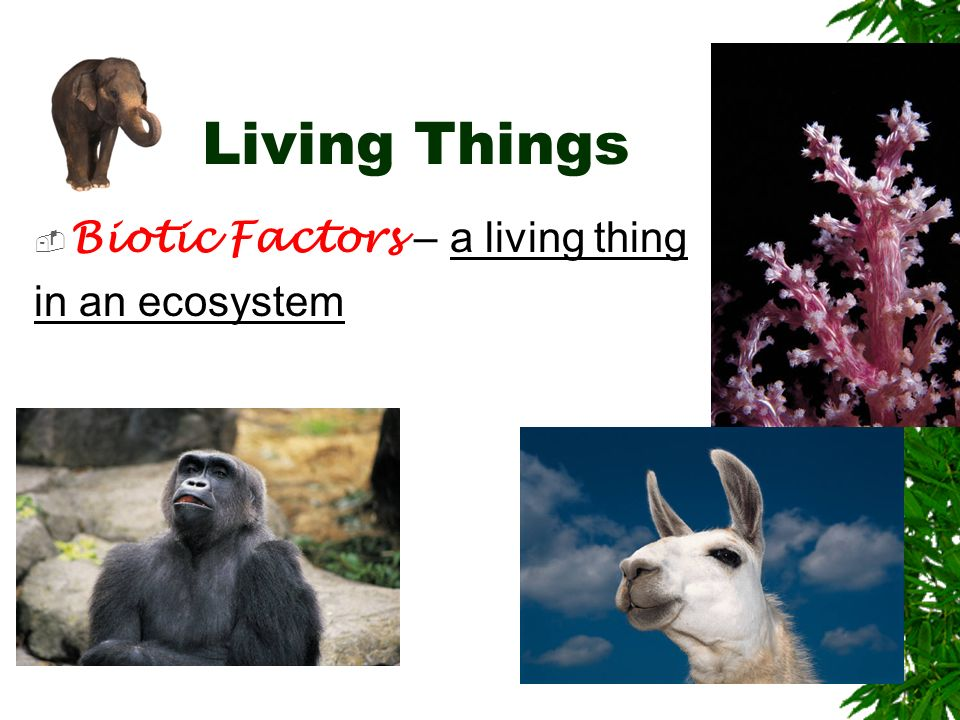 Living Things Biotic Factors – a living thing in an ecosystem