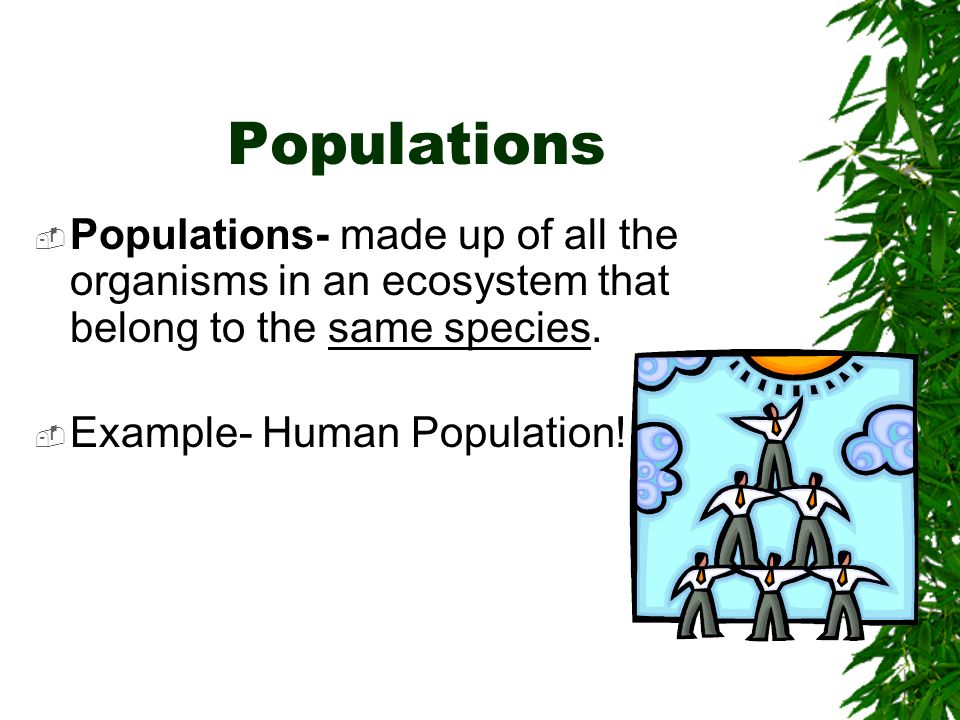Populations Populations- made up of all the organisms in an ecosystem that belong to the same species.
