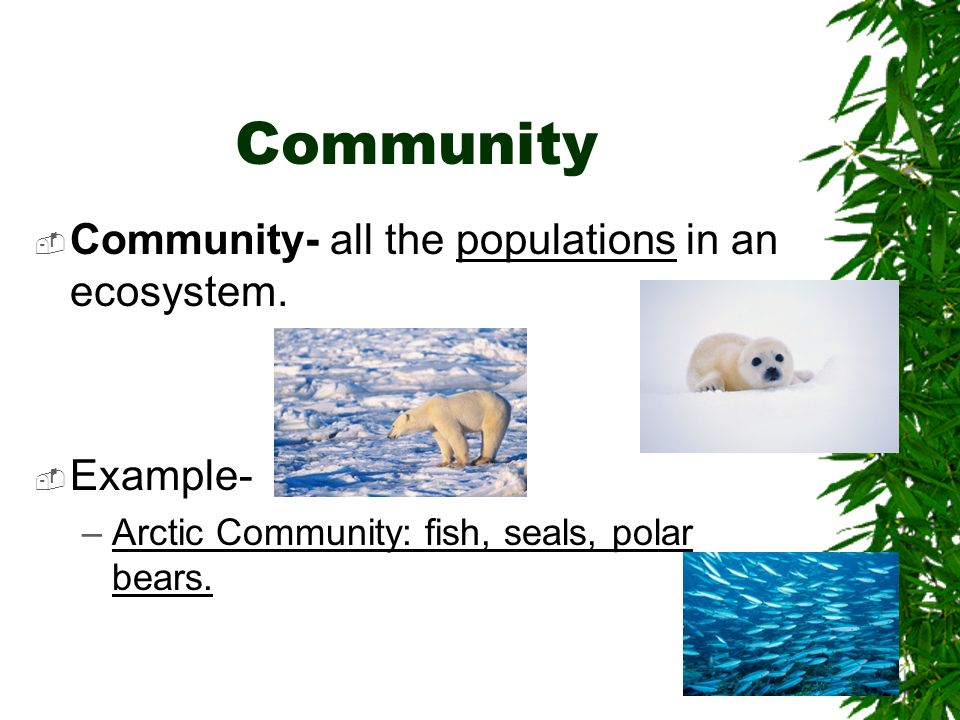Community Community- all the populations in an ecosystem. Example-