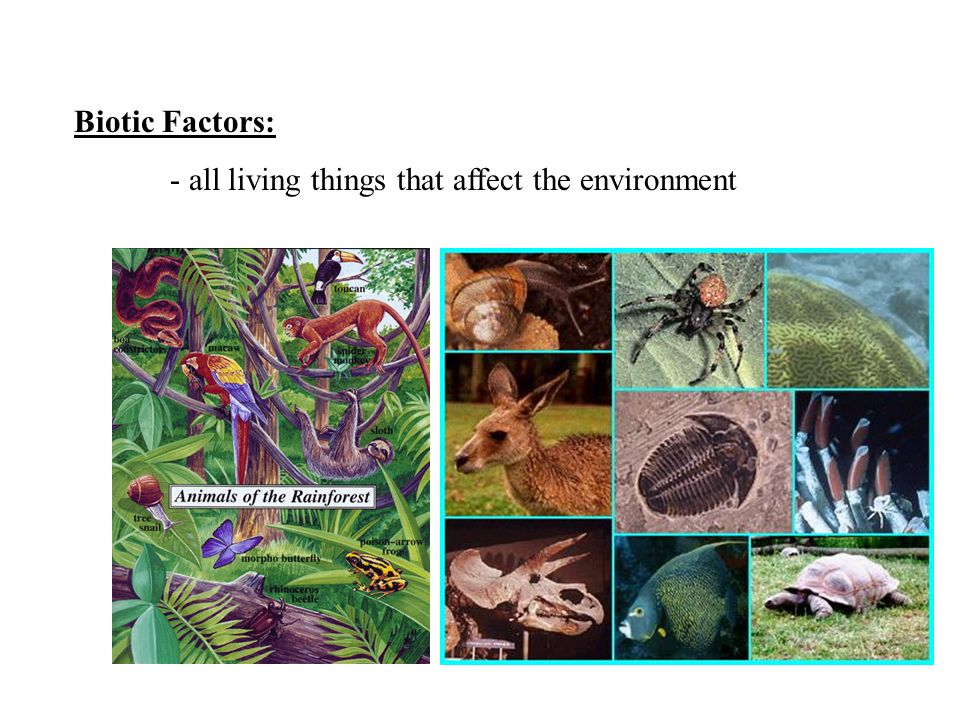 Biotic Factors: - all living things that affect the environment